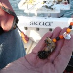 flounder (17)
