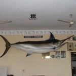 Malindi Sea Fishing Club 2006