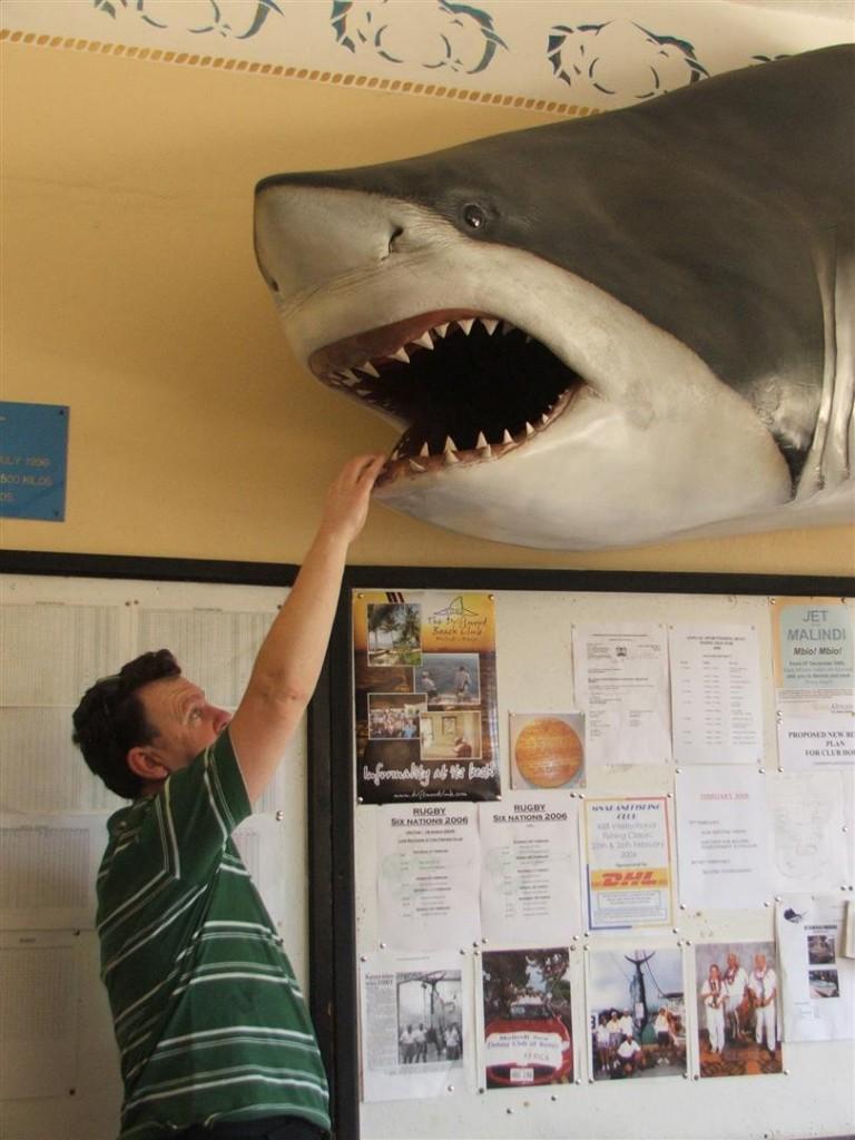 Kingfisher club shark 3 (Large)