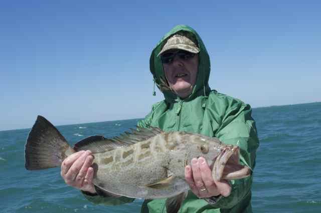 Nice grouper