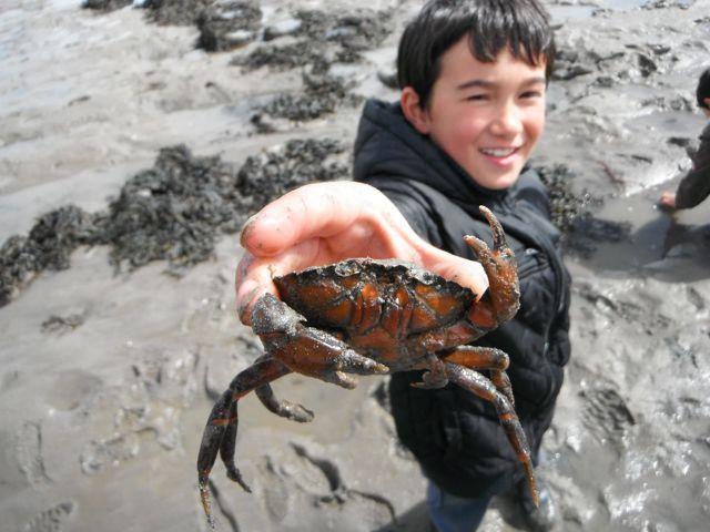 Leon & Crab