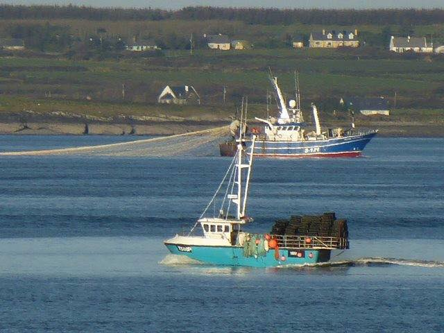 The Shannon Estuary - Sprat don't stand a chance. (Ballybunnion Sac)