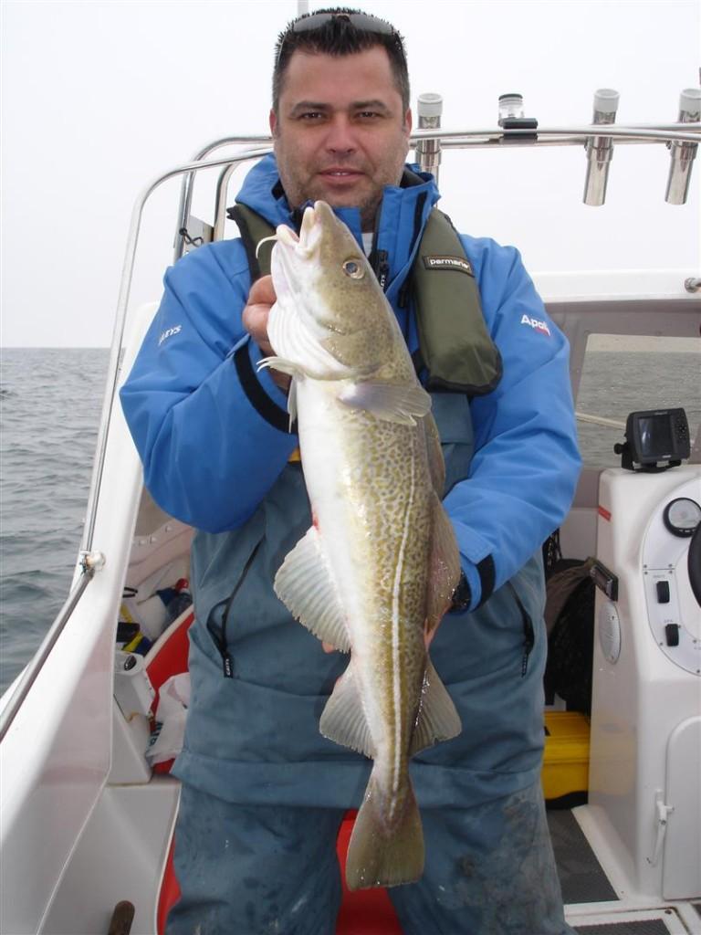 cod (3) (Large)