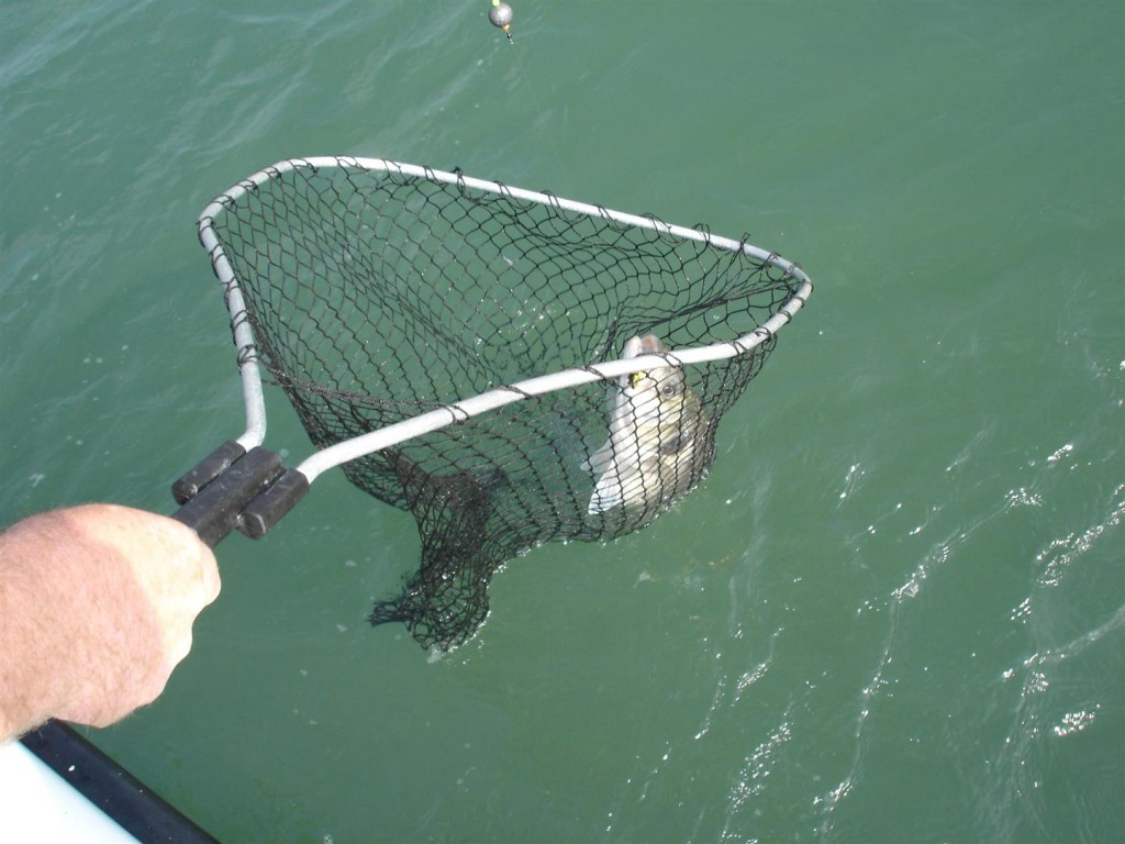 bass to the net (Large)