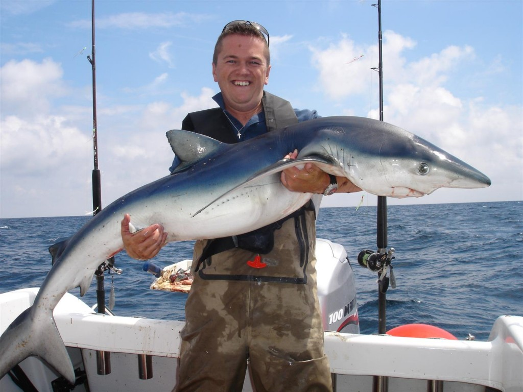 shark (8) (Large)