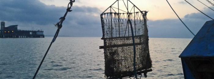 Destructive fishing... A dredge wrecks the bottom!